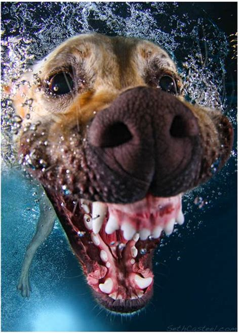 puppies underwater 25 best ideas about awesome dogs on friends and doge breed