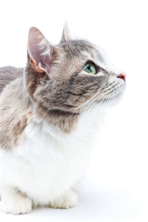 my s nose is 17 best images about cat health on allergies cat health and cat food