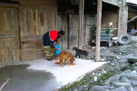 Keranjang Buat Kucing nasib malang satwa di tengah amukan gunung sinabung
