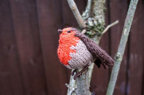 knitting pattern robin 6 knitted birds from parrots to robins