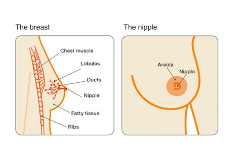 how do i stop male breast buds quickly healthtap invasive ductal breast cancer