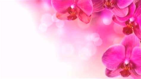 wallpaper bunga es kumpulan background bunga part 1 youtube