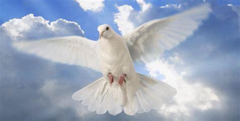 imagenes de palomas blancas de la paz el espiritu santo paloma related keywords el espiritu