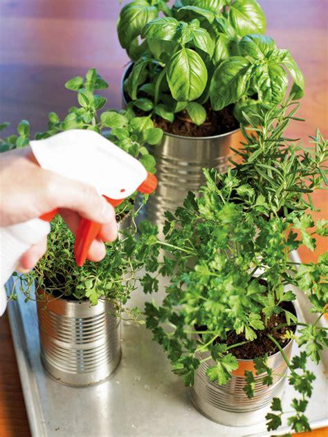 grow   kitchen countertop herb garden hgtv