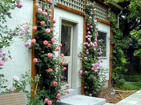 ideas for climbing rose supports cut cut and keep climbing roses interior design ideas ofdesign