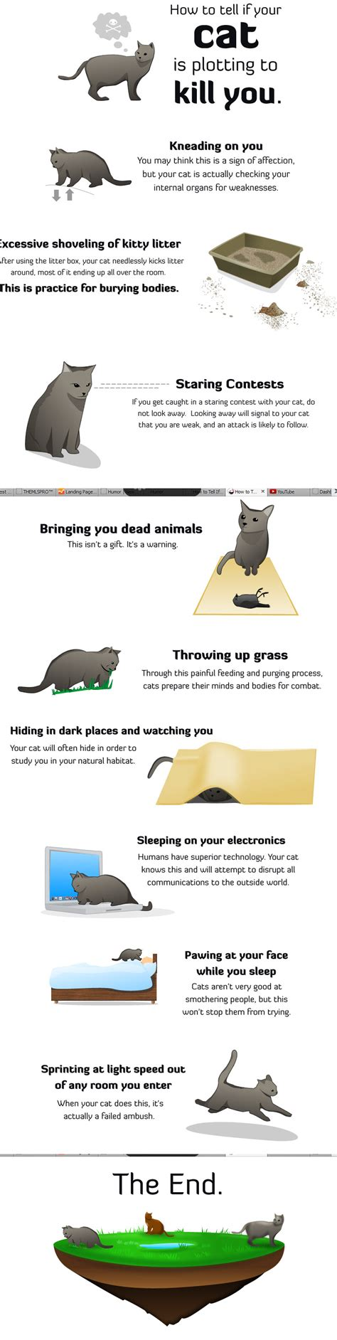 how to tell if your cat is plotting to kill you the oatmeal liveleak cat gives a comments