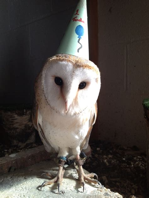 Happy Birthday Owl Meme - 1000 images about inspiration owls on pinterest owl