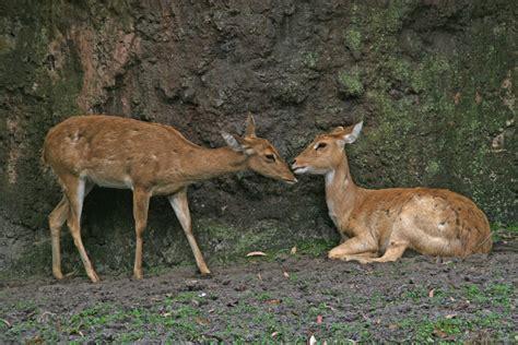 Maianan Animal Kingdom disney s animal kingdom 3 by marinacborne on deviantart