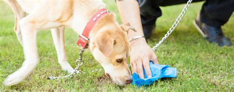 why puppies eat their nhv pet products