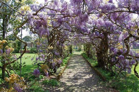 kawachi fuji gardens travel trip journey kawachi fuji gardens japan