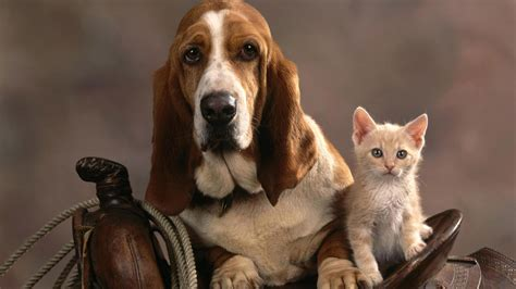 Helpless Dogs And Cats Are For Your Help by Cat And Wallpapers Wallpaper Cave