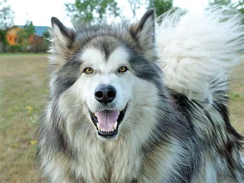 alaskan names for dogs alaskan names creative ideas from a beautiful place