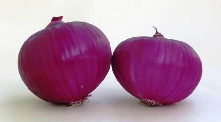 membuat zpt alami menggunakan bawang merah cara ampuh menghilangkan sakit gigi info kecantikan com