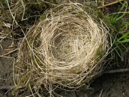 the charmed life bird nests on a nearly worldess wednesday
