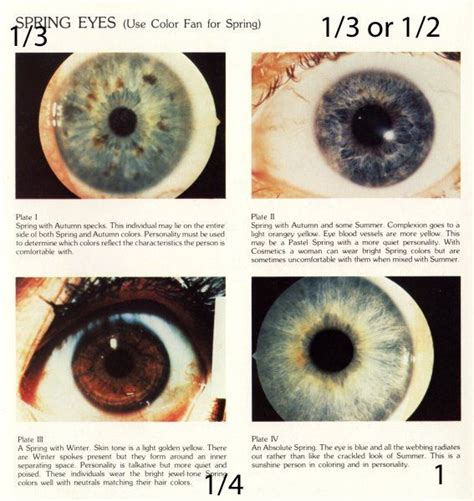 eye pattern analysis ppt 17 best images about color analysis spring on pinterest