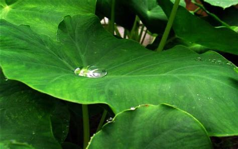 poisonous plants for dogs 10 most poisonous plants for dogs every owner should read this
