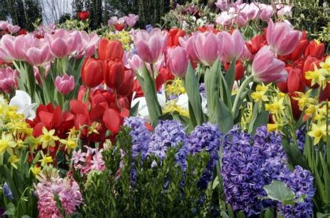 planting protecting fall bulbs vanderwees home garden