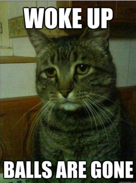 Pussy Cat Meme - depressed cat meme needs a good ol cheering up 16 photos