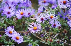 do you your birth month flower and colour daily