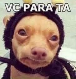 Foto Meme - 43 memes de animais para voc 234 ter na manga mdemulher