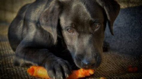 dogs eat vegetables healthy paws