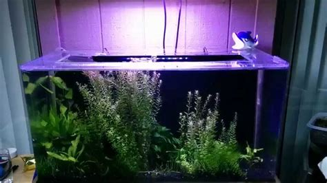 Aquarium V Ii seaclear system ii update 10