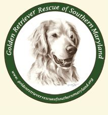 golden retriever rescue league helpful articles chesapeake pet resort day spa md