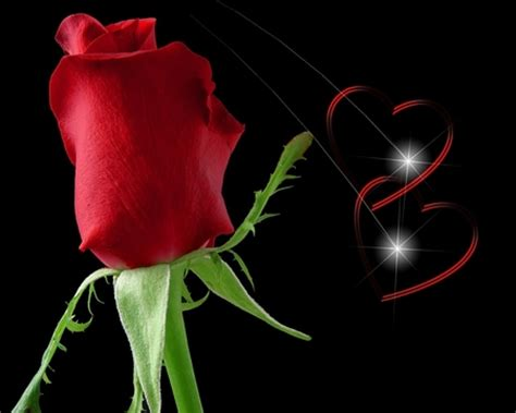 wallpaper 3d rose roses pictures 3d rose pictures roses wallpapers