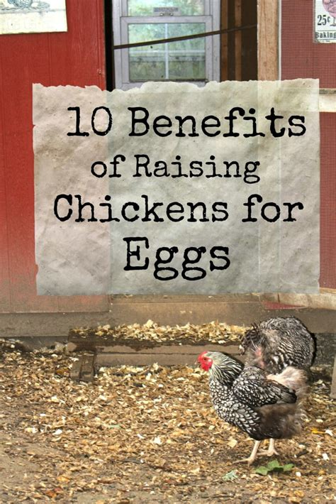 Benefits Of Backyard Chickens Benefits Of Backyard Chickens Benefits Of Backyard