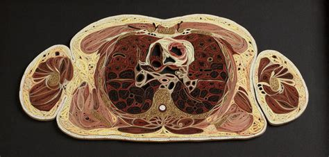 cross section human body paper anatomy by lisa nilsson