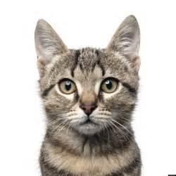 domestic cats kill billions mice birds study estimates huffpost