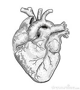 heart a stock vector image 50187983