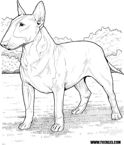 Scottish Terrier Coloring Page Free Scottish Terrier Terrier Coloring Pages