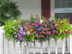 cascading flowers for window boxes painters tips