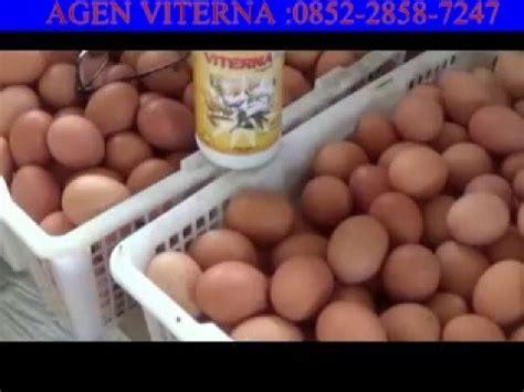 Vitamin Ayam Petelur Viterna clip hay vitamin dan nutrisi pakan untuk budidaya
