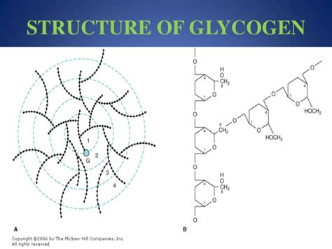 4 exles of carbohydrates diagram of glycogen 28 images carbohydrate keep calm