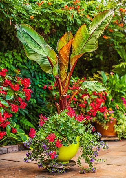 sun l for plants container gardens with pizzazz gardens beautiful and sun