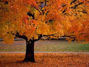 Business Cards Colorado Springs Autumn Fall Tree Leaves Craft Preschoolers Free Tr1 Jpg Pictures To Pin On Pinterest