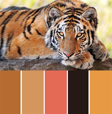 tiger colors inspiration item the tiger bespoke