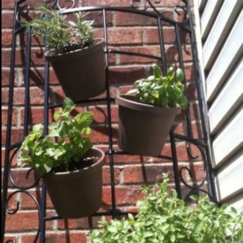 hanging herb garden hanging herb garden vegetable garden pinterest