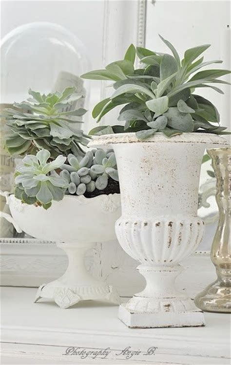 decorated cooking urn 17 best images about succulents on pinterest gardens