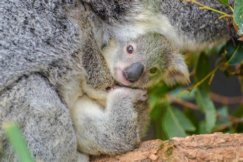 fotos animales bebes tiernos 9 animales beb 233 s tiernos que te derretir 225 n en tus viajes