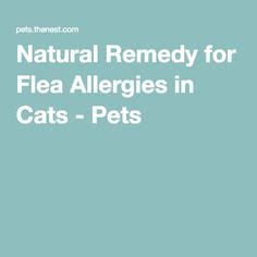 flea allergy home remedy a home cure for mange skin allergies and fleas