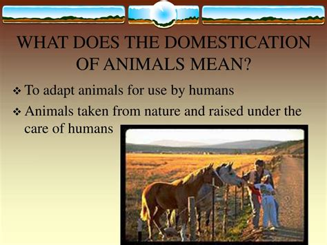 what does no section 8 mean ppt domestication and importance of livestock powerpoint