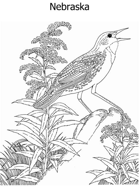 husker n coloring pages coloring coloring pages