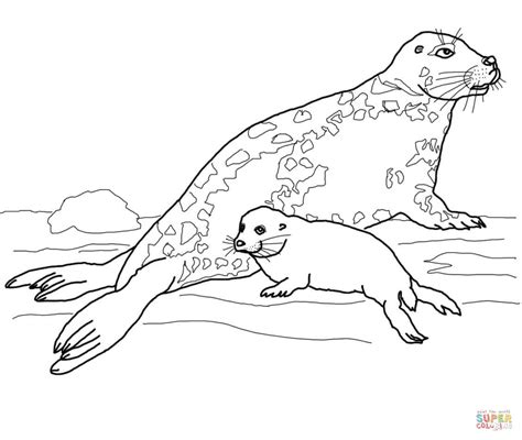 baby seal coloring pages coloring home