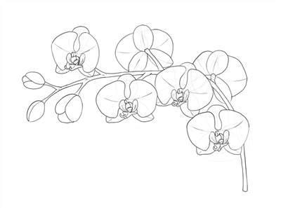 gambar bunga anggrek kartun hitam putih gambar bunga