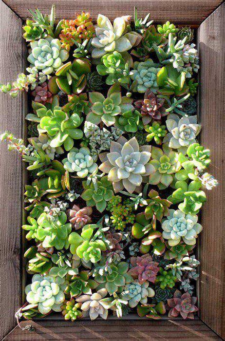 succulent vertical garden gardens pinterest