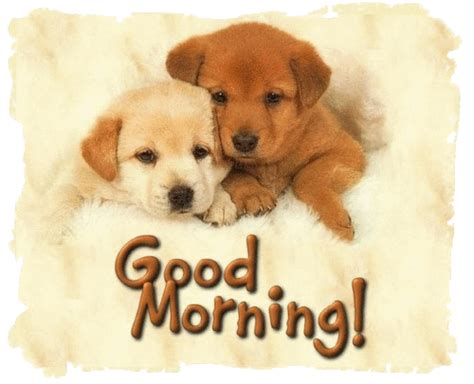 morning puppy morning puppies pictures photos and images for and
