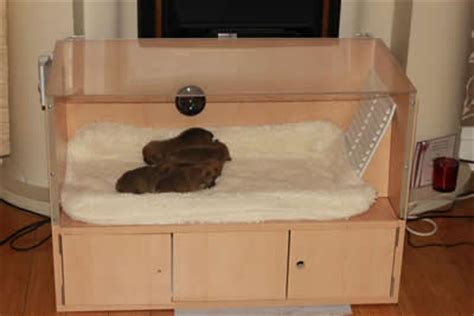 puppy incubator services puppy incubators breeds picture